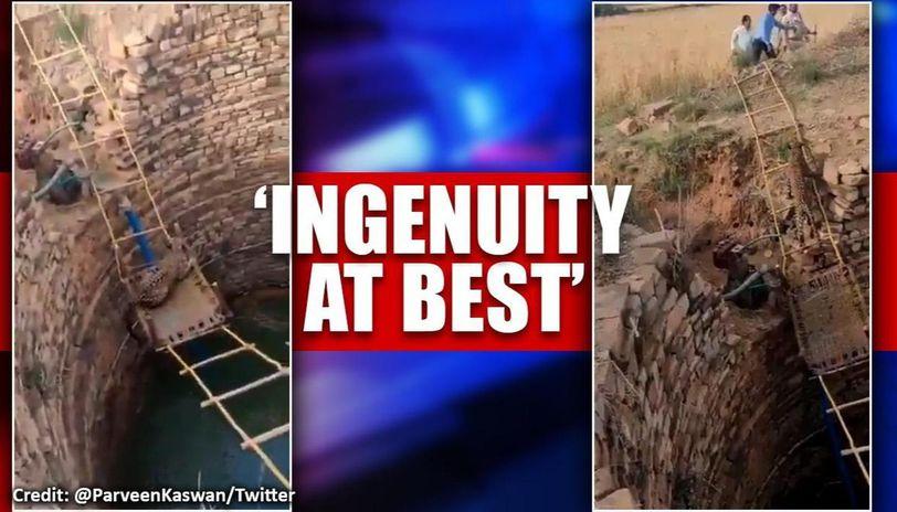 Madhya Pradesh leopard rescued using innovative technique, watch video