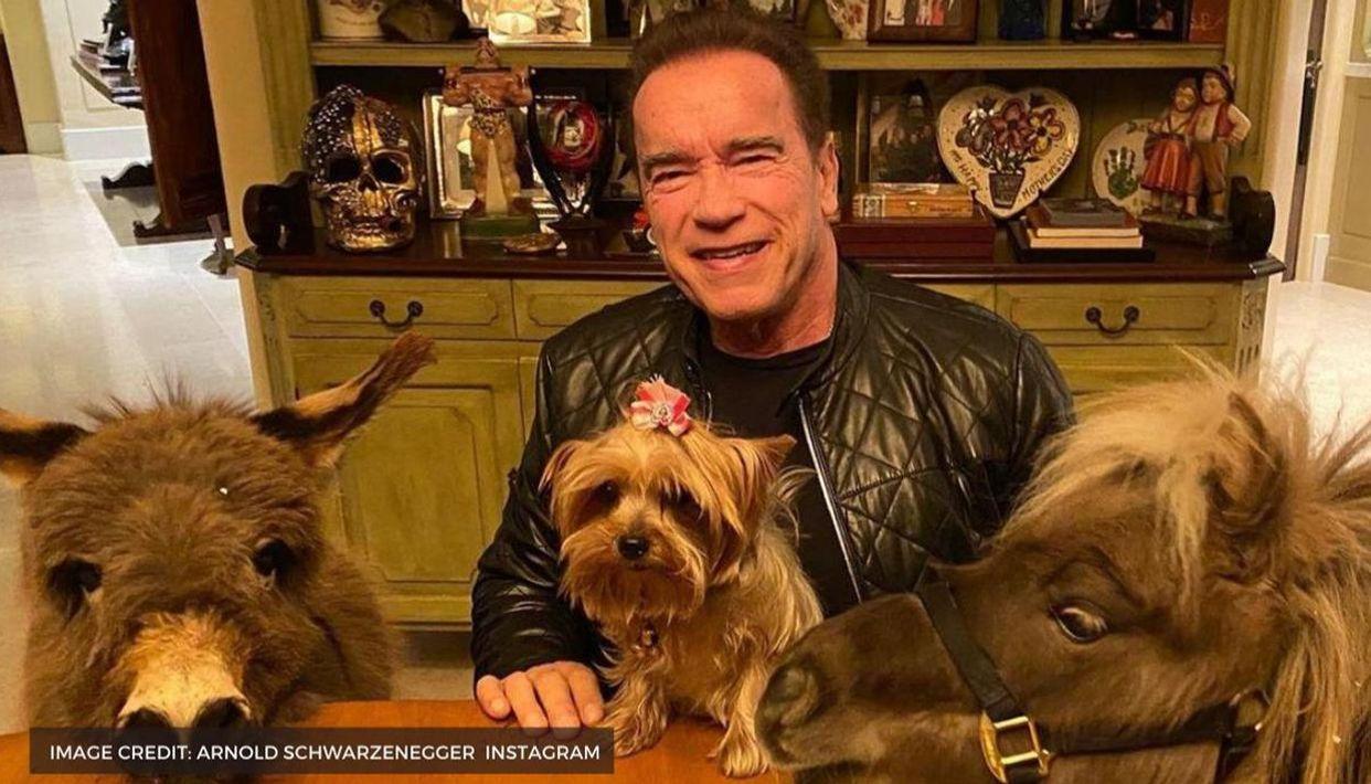 Arnold Schwarzenegger S Net Worth Is So Huge He Can Even Say Hasta La Vista To Working