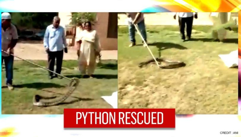 Haryana: 8-foot-long python rescued from a car, later ...