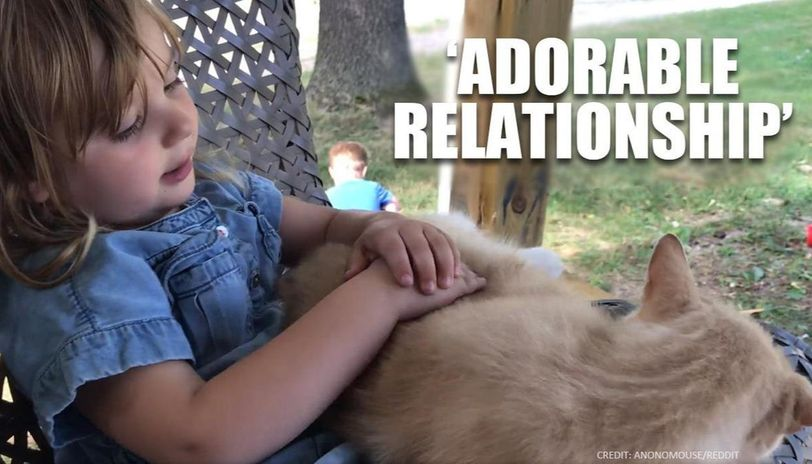 'Adorable friendship' between a girl and her cat wins internet