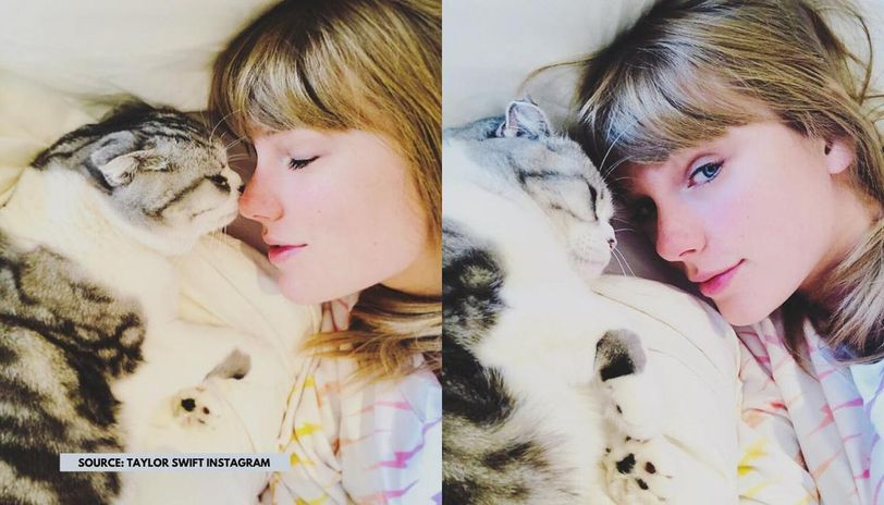 Taylor Swift S Loves Her Cats Dearly And These Pics Are Proof