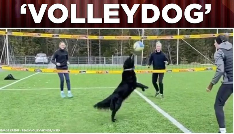 Dog playing volleyball with humans amid lockdown, breaks internet