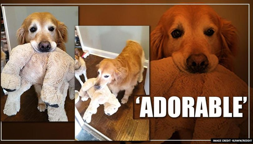 Dog who welcomes people with her stuffed animals is winning hearts on internet
