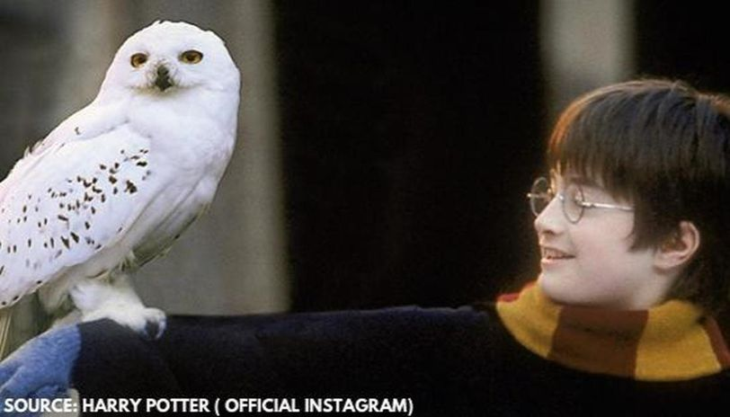 is harry potter coming to netflix
